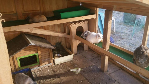 Intérieur d'un abri pour lapin