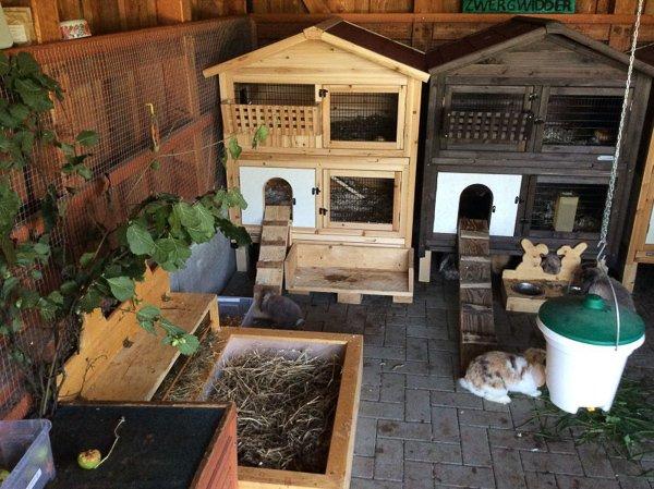 Deux clapiers à l'intérieur d'un abri pour lapin