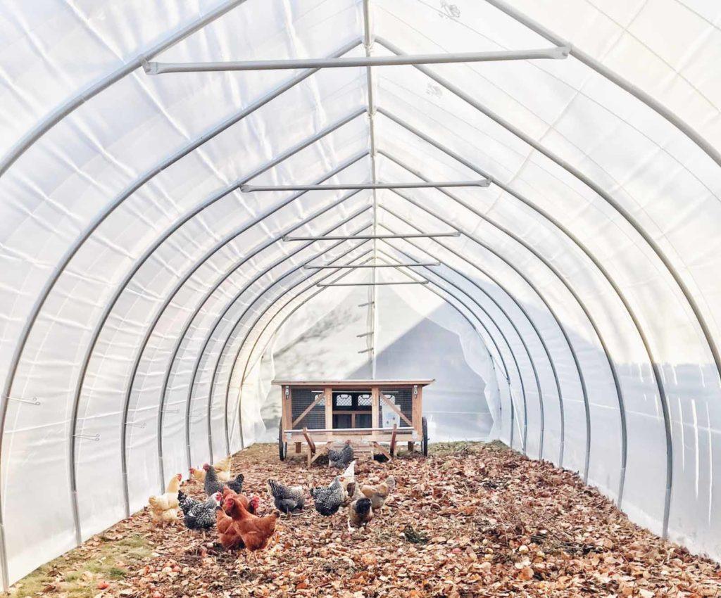 Parc grillagé qui sert d'enclos pour poules