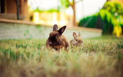 Mon lapin vit dehors : quelle installation prévoir dans le jardin ?
