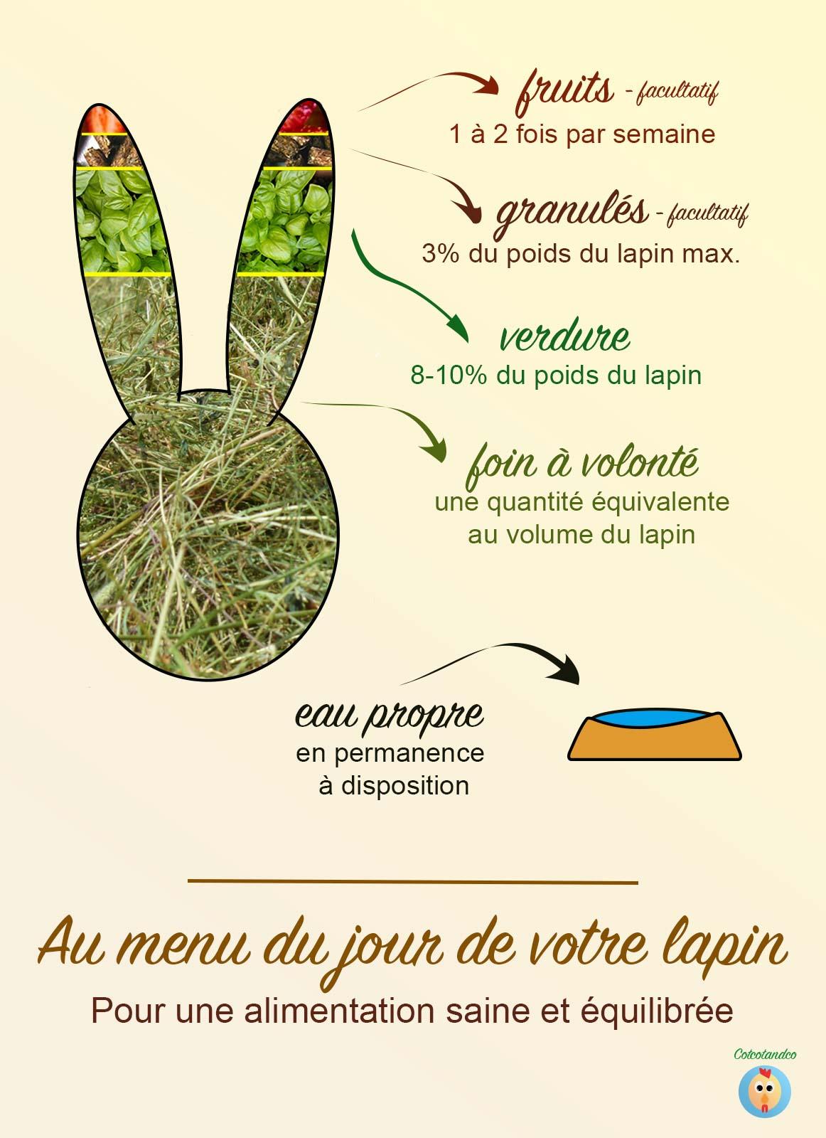 Infographie alimentation du lapin
