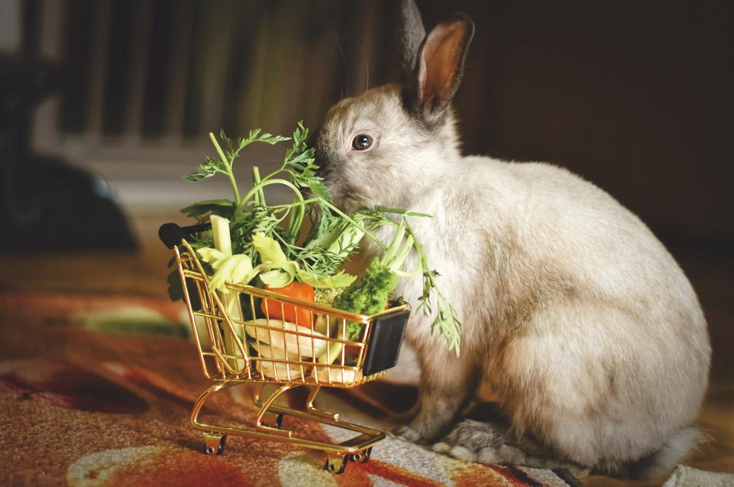 Lapin qui mange des herbes et des légumes