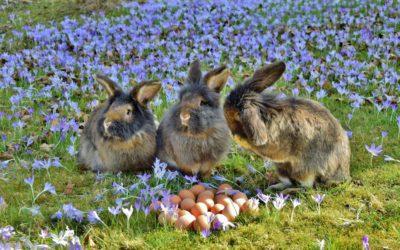 Bien choisir ses granulés pour lapin : composition & quantité