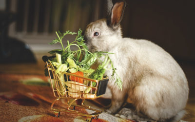 Quels légumes et verdure donner à manger à mon lapin ?