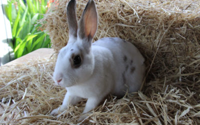 Litière pour lapin : comment choisir la bonne ?