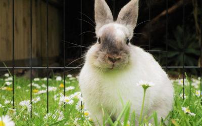 Comment (bien) aménager et sécuriser l'enclos extérieur de votre lapin