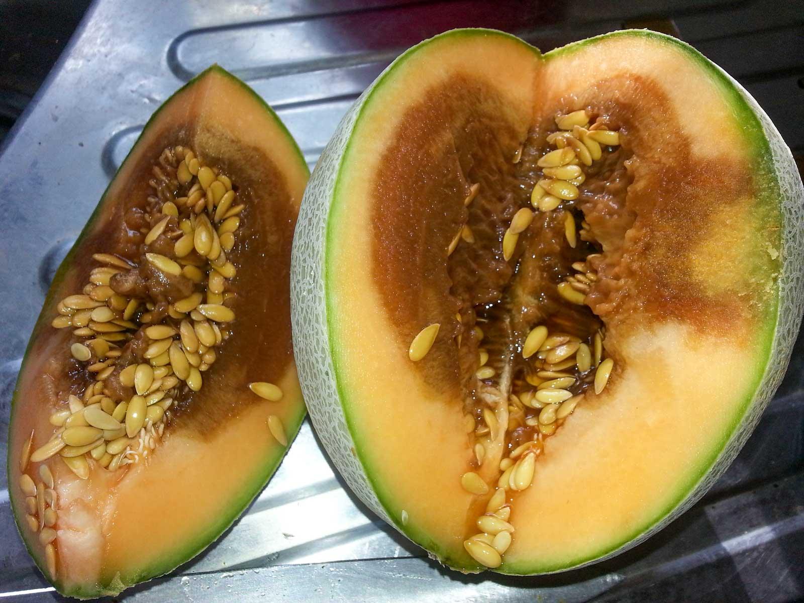 Le melon pourri n'est pas bon pour les poules