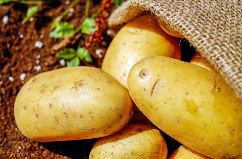 Les épluchures de pommes de terre sont toxiques pour les poules