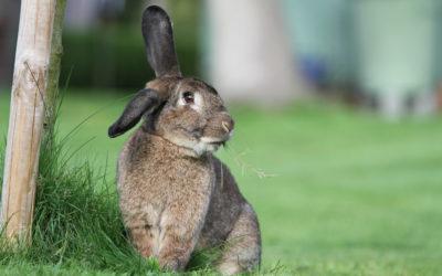 Donner à manger à son lapin : les 5 accessoires essentiels du coin repas