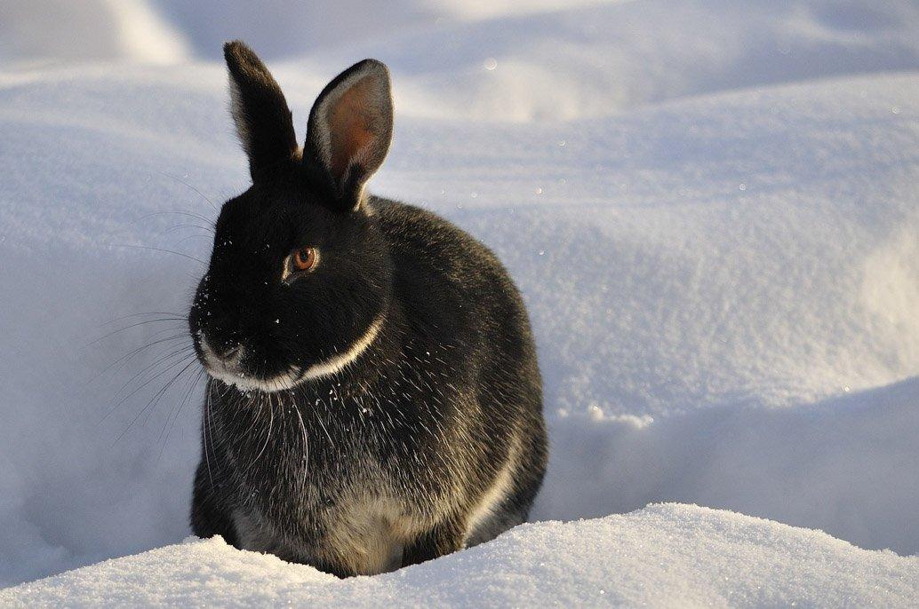Lapin dehors en hiver dans la neige