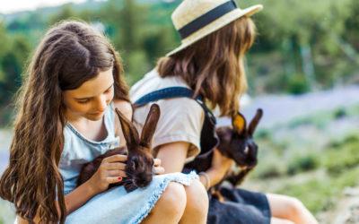Animalerie ou refuge : où acheter mon lapin ?