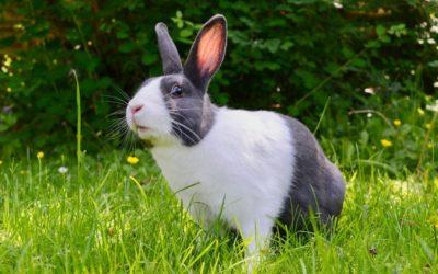 Enclos extérieur du lapin en été : comment protéger son animal de la chaleur
