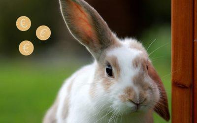 Budget lapin : quelles dépenses faut-il prévoir (par mois et par an) ?